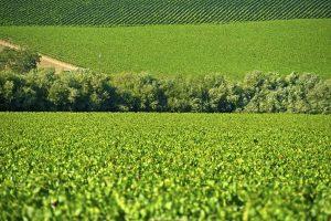 Enhanced Produce Traceability Standards Ahead – Are You Ready?