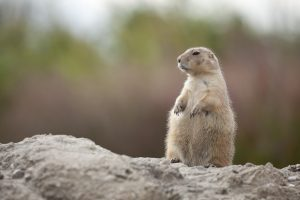 What Your Business Can Learn From Groundhog Day